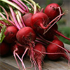 Feature: Beetroot Recipes